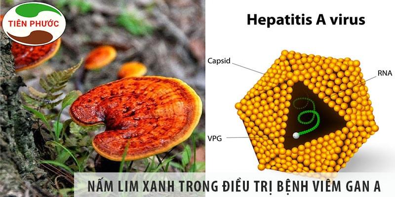 Tác Dụng Của Nấm Lim Xanh Trong Việc Chữa Bệnh Viêm Gan A