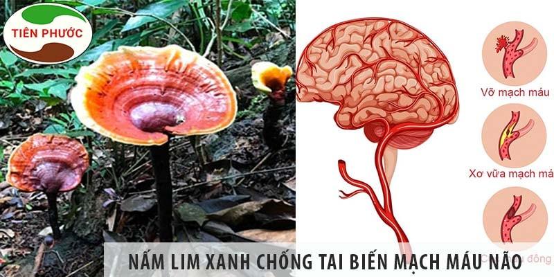 Tác Dụng Của Nấm Lim Xanh Trong Chống Tai Biến Mạch Máu Não
