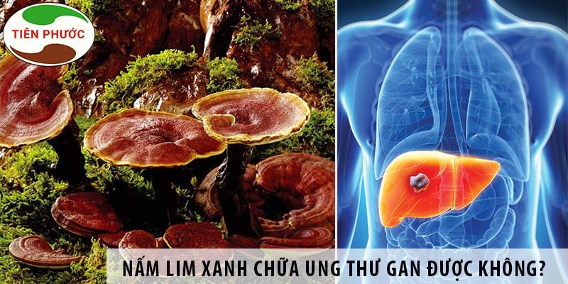 Nấm Lim Xanh Chữa Bệnh Ung Thư Gan được Không?
