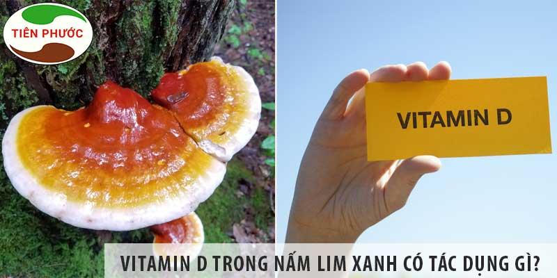 Vitamin D Trong Nấm Lim Xanh Có Tác Dụng Gì?