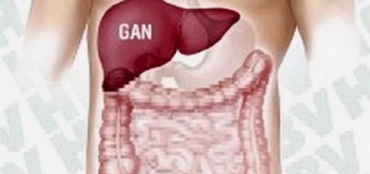 Nấm lim xanh trị các loại bệnh về gan